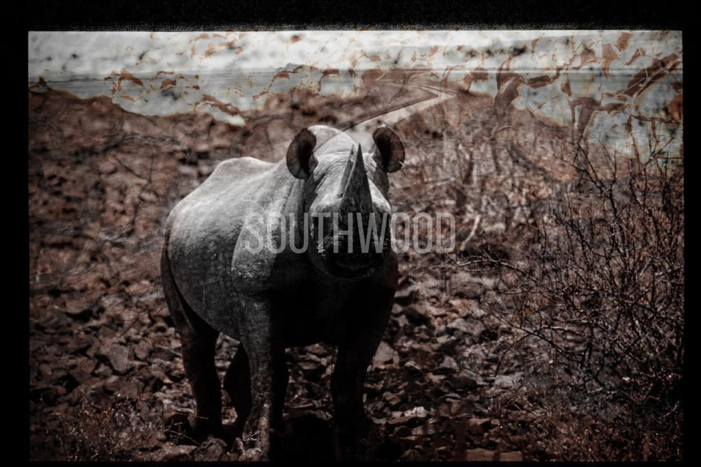 Rhino Watch - © Dave Southwood